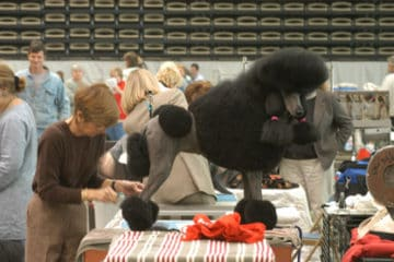 Boardwalk Kennel Club All Breed Dog Show
